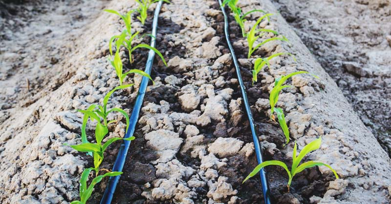 Drip irrigation system – estimated costs